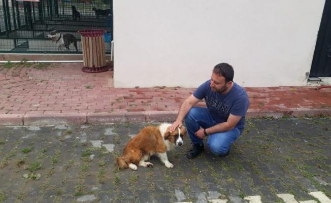 İnşaat Demirinin Saplandığı Köpek Sağlığına Kavuşuyor